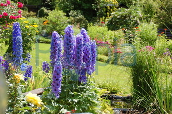 bildagentur pitopia - bilddetails - rittersporn im garten (andrea ... - Garten Blumen Blau