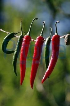 wie chili trocknen
