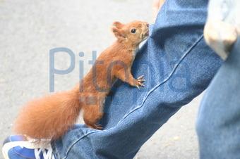 eichhörnchen in der hose