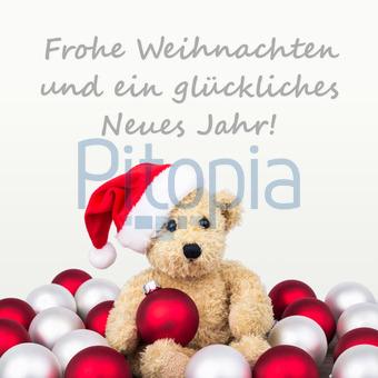 Weihnachtsgrüße Deutsch.Bildagentur Pitopia Bilddetails Frohe Weihnachten Cora Müller