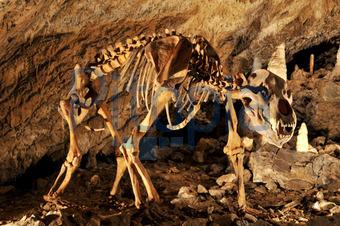 tropfsteinhöhle harz wernigerode