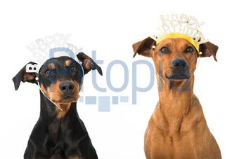 Happy Birthday Dogs Judith Dzierzawa