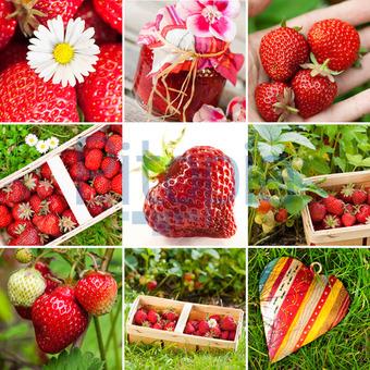 Bildagentur Pitopia Bilddetails Erdbeeren Collage Judith