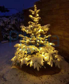 Tannenbaum Beleuchtet Aussen.Bildagentur Pitopia Bilddetails Weihnachtsbaum Tannenbaum