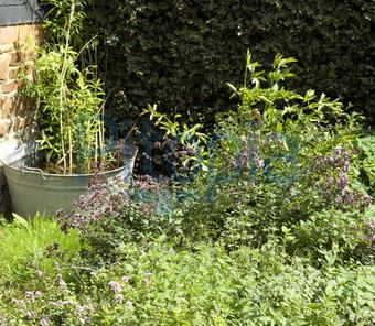 Bildagentur Pitopia Bilddetails Bauerngarten Kleiner