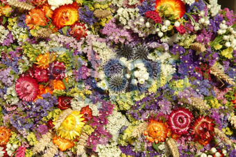 Getrocknete Blüten bildagentur pitopia bilddetails getrocknete blumen foto fritz