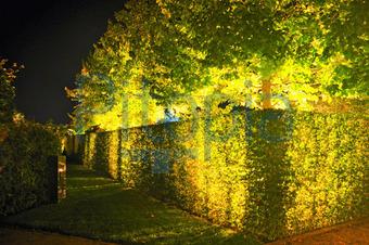 Beleuchtung Hecke   Bildagentur Pitopia Bilddetails Leuchtende Hecke Hans Jurgen