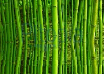 Wellness bilder grün  Bildagentur Pitopia - Bilddetails - Bambus (Gabi Siebenhühner ...