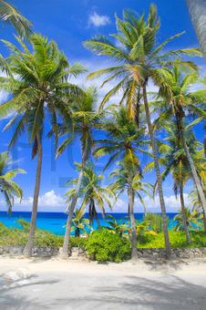 Bildagentur Pitopia Bilddetails Palmen Strand Auf Long Island