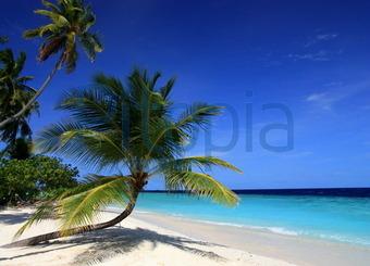 Bildagentur Pitopia Bilddetails Paradiesische Aussicht Coco