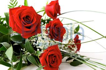 Bildagentur Pitopia Bilddetails Rote Rosen Cornelia Danzer