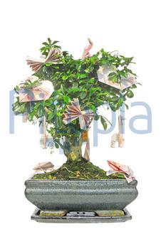 Bildagentur Pitopia Bilddetails Bonsai Mit Geldscheinen