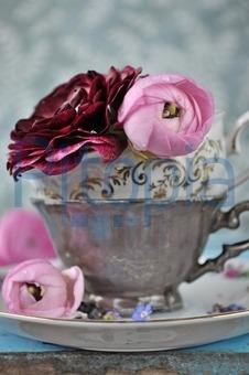 Blumen Landhausstil bildagentur pitopia bilddetails ranunkeln ischoenrock bild