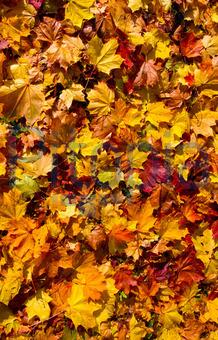 Bildagentur Pitopia Bilddetails Herbstblatter Hintergrund
