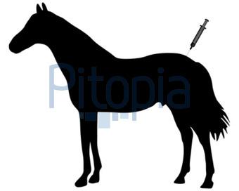 Bildagentur Pitopia Bilddetails Impfung Für Pferde Lantapix