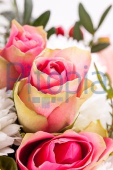 Bildagentur Pitopia - Bilddetails - Frische Schöne Schnittblumen ... Schnittblumen Frische Strause Garten