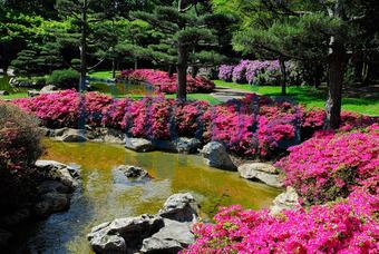 pflanzen japanischer garten – rekem, Hause und Garten