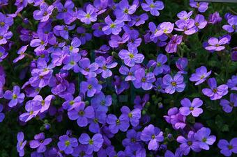 Bildagentur Pitopia Bilddetails Blaukissen Artofpictures Bild