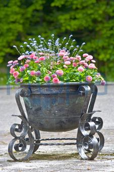 Bepflanzte Blumenkübel bildagentur pitopia bilddetails blumenkübel udo kuehn bild