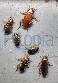 Bildagentur Pitopia Bilddetails Kakerlaken Ralf Kallmeyer Bild