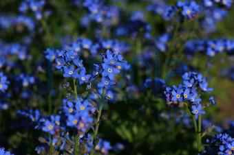 Bildagentur Pitopia - Bilddetails - blaue Sternchen (Schnecke ...