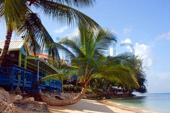 Strandhaus karibik  Bildagentur Pitopia - Bilddetails - Barbados Westküste (MS) Bild ...