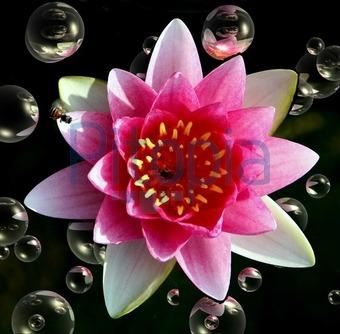 Wasserblume Spielzeug für draußen