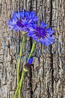 Bildagentur Pitopia Bilddetails Blaue Kornblume Auf Holz Sonja