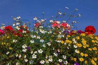 Bildagentur Pitopia Bilddetails Bunte Balkonblumen Und Blauer