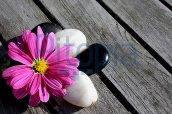 Blumenbilder Schwarz Weiß bildagentur pitopia bilddetails blumendeko ujac bild 590813