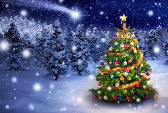 Weihnachtsstern Für Tannenbaum.Bildagentur Pitopia Bilddetails Weihnachtsbaum In Verschneiter