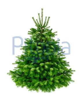 Bild Tannenbaum.Bildagentur Pitopia Bilddetails Perfekter Dichter Tannenbaum