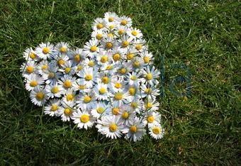 Bildagentur Pitopia Bilddetails Herz Aus Blumen Astrid Weiss
