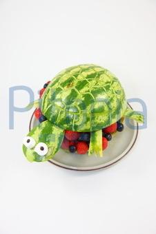 Bildagentur Pitopia Bilddetails Lustige Melonen Schildkröte Jan